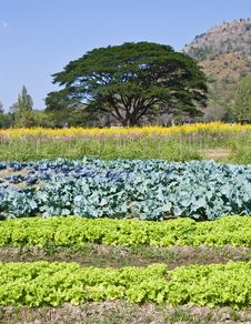 Free Vegetables Plots Royalty Free Stock Photos - 22945368