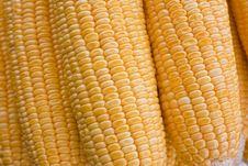 Free Yellow Corn Royalty Free Stock Photos - 22955468
