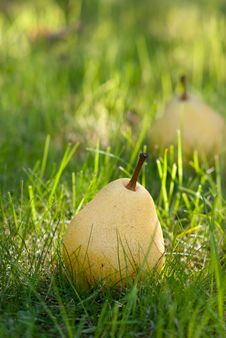 Free Pears Royalty Free Stock Photos - 22958068