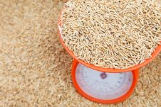 Free Brown Rice Paddy Royalty Free Stock Photos - 22958158