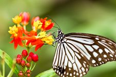 Free Butterfly Royalty Free Stock Image - 22958256
