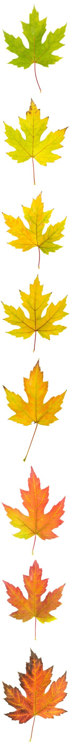 Free Autumn Colors Montage Royalty Free Stock Photos - 22958448