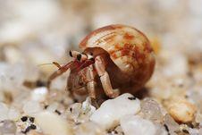 Free Hermit Crab Stock Image - 22976871
