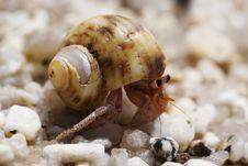 Free Hermit Crab Stock Image - 22977011