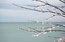 Ice On Branches Royalty Free Stock Images