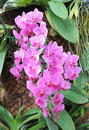 Free Orchid Stock Image - 22986951
