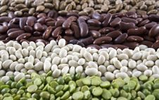 Free Row Of Dried Beans Stock Photo - 22983490
