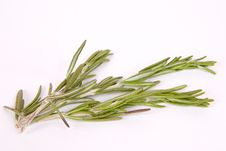 Free Twig Of Rosemary Royalty Free Stock Photos - 22984868