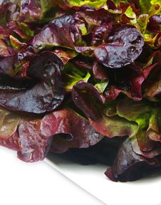 Free Lettuce Closeup Royalty Free Stock Photography - 22985617