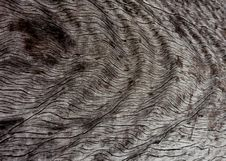 Free Wood Grain Macro Stock Image - 22988021