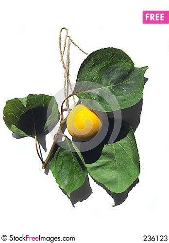 Free Tasty Apricote Stock Photos - 236123
