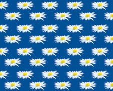 Free Daisy Stock Images - 230204