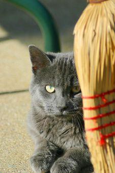 Free Cat Watching Royalty Free Stock Photo - 233485