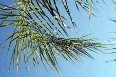 Free Palm Frond Royalty Free Stock Image - 233996