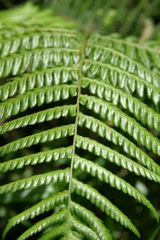 Free Leaf Texture Royalty Free Stock Photography - 234277