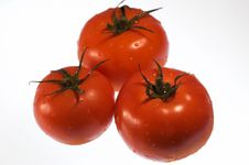 Free Red, Ripe Tomatoes With Water Droplets Royalty Free Stock Photography - 235387