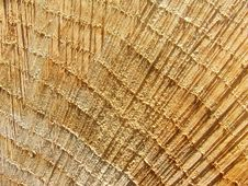 Free Woodgrain Close-up Royalty Free Stock Image - 235666