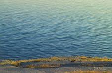 Free Sea And Dog Stock Image - 236131