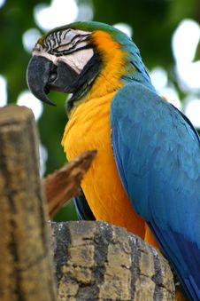 Free Parrot Stock Photography - 236352