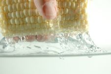 Free Corn And Hand In Water Royalty Free Stock Photo - 236535