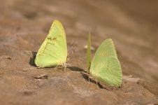 Free Butterflys On Beach Royalty Free Stock Image - 236796