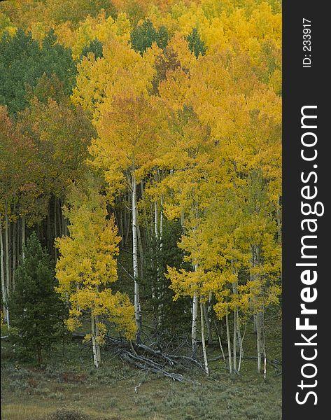 Autumn Scene 272-3-5