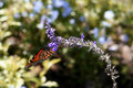 Free Monarch Butterfly I Stock Photos - 2306013