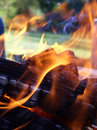 Free Flames Entwining Around Wood Stock Images - 2306154