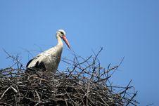 Free Stork Stock Image - 2300311