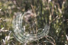 Free Spider Web Stock Photos - 2300353