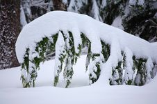 Free Fir Branch With Snow Stock Photography - 2300452