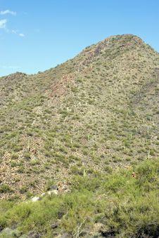 Mountain And Saguaro Stock Image