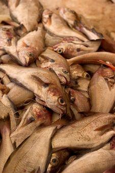 Free Sardines Stock Image - 2303461