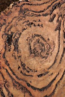 Free Wood Texture: Burl Royalty Free Stock Photo - 2304015