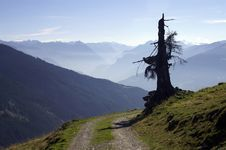 Free Old Tree On A Path Royalty Free Stock Image - 2305336