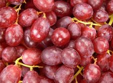Free Grapes Royalty Free Stock Photography - 2306197