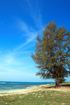 Free Tree By The Sea Royalty Free Stock Photos - 2308058