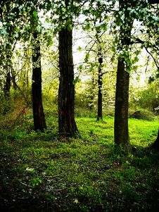 Free Forest During Sunny Day 2 Royalty Free Stock Photos - 2309478