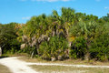 Free Cluster Of Palm Trees Along Dirt Road Royalty Free Stock Photo - 23000935