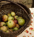 Free Apples In The Basket Royalty Free Stock Photos - 23004158