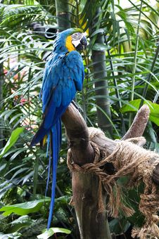 Free Macaw Parrot Royalty Free Stock Images - 23000599