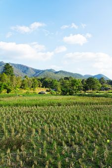 Paddy Field In Countryside Stock Photos