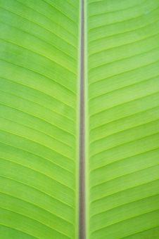 Free Banana Leaf Stock Photo - 23001940