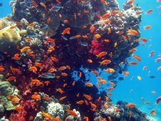 Free Coral Fish Royalty Free Stock Photography - 23004687