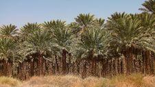 Free Palm Grove Royalty Free Stock Photos - 23004968