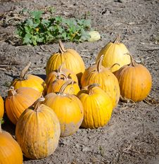 Free Pumpkin Stock Images - 23005894