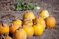 Free Pumpkin Royalty Free Stock Image - 23005946