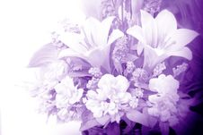 Free Flowers In Purple Royalty Free Stock Photography - 23021027