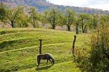 Free A Horse And An Apple Orchard Beneath A Mountain Stock Images - 23021314