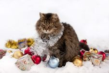 Free Cat In Winter Royalty Free Stock Photo - 23023205